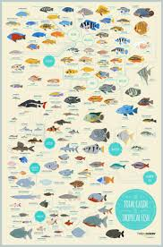 Saltwater Fish Compatibility Chart Saltwater Aquarium Fish Compatibility Chart Aquarium