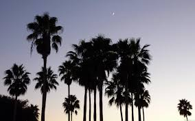 palm trees tumblr vintage. Here\u0027s A Tropical Scene With The Silhouette Of Palm Trees And Crescent Moon In Background. Dusk Tumblr Vintage