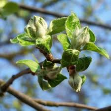 Homemade Spray For Fruit Trees