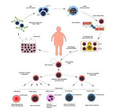 Hematopoietic Stem Cell Chart Clinical Implementation Of Genome Editing For Correction Of