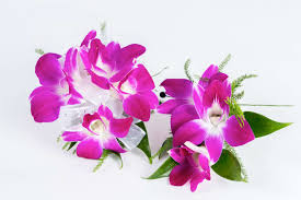 purple orchid corsage and boutonniere set