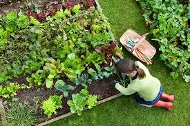 beginner s gardening