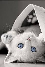 black and white kitten with blue eyes. Brilliant With I Remember A Great Cat Named Purity White With Blue Eyes Inside Black And Kitten With Blue Eyes