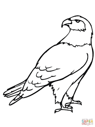 Hawk Bird Coloring Pages Get Coloring Pages