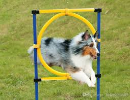 outdoor training equipment pet dog agility exercise sports obence show activity hoop jump game exercise pole carrying case dog agility pet dog cat