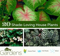8 Fast Growing Vines  HGTVClimbing Plants That Like Shade
