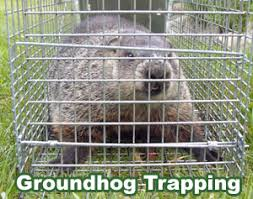 how to keep groundhogs out of my garden. Modren Keep With How To Keep Groundhogs Out Of My Garden