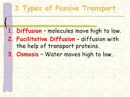 3 Types Of Passive Transport Section Objectives Explain How The Processes Of Diffusion