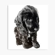 English Cocker Spaniel Black Puppy Dog ...