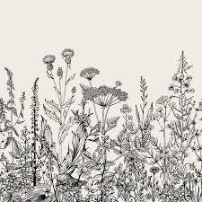 Kruiden Vectoren Illustraties En Clipart 123rf