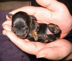chiot-bebe-chien - monde a 'tou - zizirator05 - Photos - Club Doctissimo