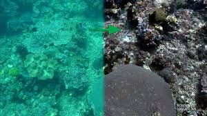 This Algorithm Removes Water From Underwater Photos And