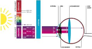ultraviyole lamba zararları