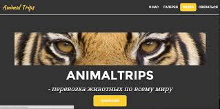 Бондарик Мария Курсовой проект Создание сайта компании  Бондарик Мария Курсовой проект Создание сайта компании занимающейся перевозками животных