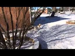 Woody Roxie Lawrence in the snow - YouTube
