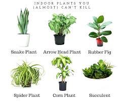 great indoor plants low light houseplants