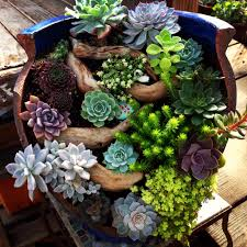 Unwins Kitchen Garden Herb Kit Beautiful Broken Pot At Succulent Gardens Succulent Succulence
