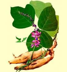 Resultado de imagen de kudzu planta