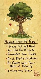 Tree Quotes Cool Inspirational Positive Life Quotes Advice From A Tree OMG