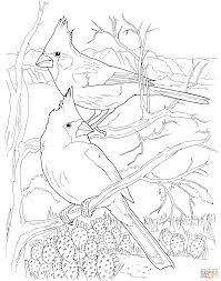 Small Picture Desert Cardinals coloring page Free Printable Coloring Pages