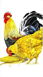rooster dish towels rooster dishtowels rooster and hen cotton flour sack dish towel tea towel mas