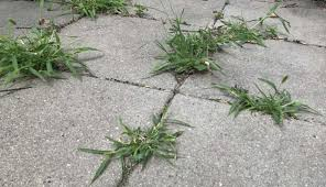 get rid of weeds on your patio