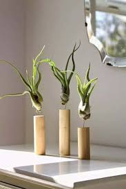 diy air plant display in wooden stands with wires