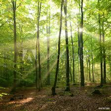 Fotobehang Forest Foto4art