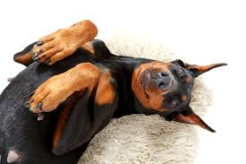 get rid of household dog smells