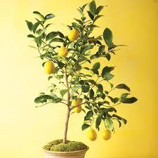 Best 25 Fruit Tree Nursery Ideas On Pinterest  Fruit Tree Garden Pots For Fruit Trees