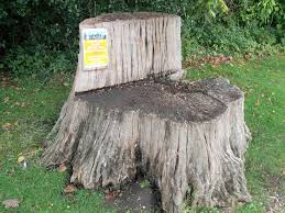 Tree Stump Seats Bletchley Park The Lake Tree Stump Seat This Is The Flickr