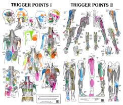 Free Trigger Point Chart The Brain Behind Myofascial Trigger Points Spmx Ca
