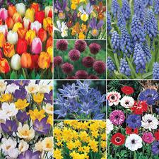 classic dutch garden collection