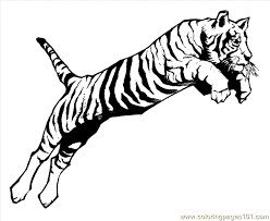 Small Picture Lion Tiger Coloring Page 04 Coloring Page Free Tiger Coloring