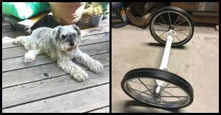 11 easy diy dog wheelchair ideas on a