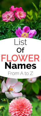 garden flower names. Interesting Garden Complete List Of Flower Names On Garden A