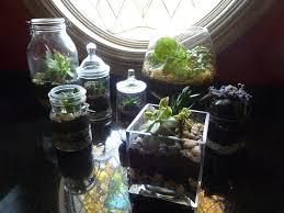 diy terrariums bridgette meinhold