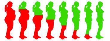 Výsledok vyhľadávania obrázkov pre dopyt lose weight
