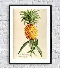 hanging wall prints pineapple prints