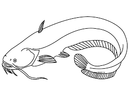 Catfish Coloring Page Ready To Be