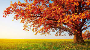 free tree wallpaper for phone mobile high definiton wallpapers desktop images amazing colourful 4k quality