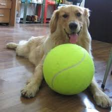 9.5 Inches <b>24CM Giant Tennis Ball</b> Pet Dog Chew Toy Signature ...
