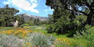 santa barbara botanic garden photo contributed