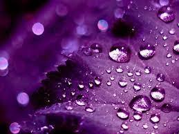 Purple HD Wallpapers - PixelsTalk.Net