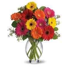 Image result for gerbera in a vase