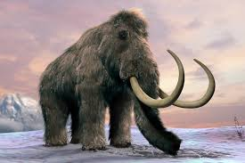 essay on extinct animals woolly mammoths wiped out by grass  woolly mammoths wiped out by grass invasion