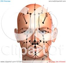 Acupressure Chart Clipart 3d Male Acupressure Chart Head 6 Royalty Free Cgi