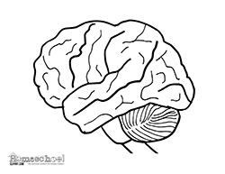 Small Picture Human Brain Clipart Coloring Worksheets