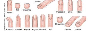 Nail Type Chart Types Of Nails Really Useful Chart Different Nail Shapes