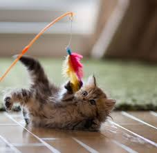 Image result for cats playing